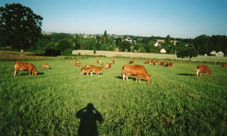 Depuis les champs